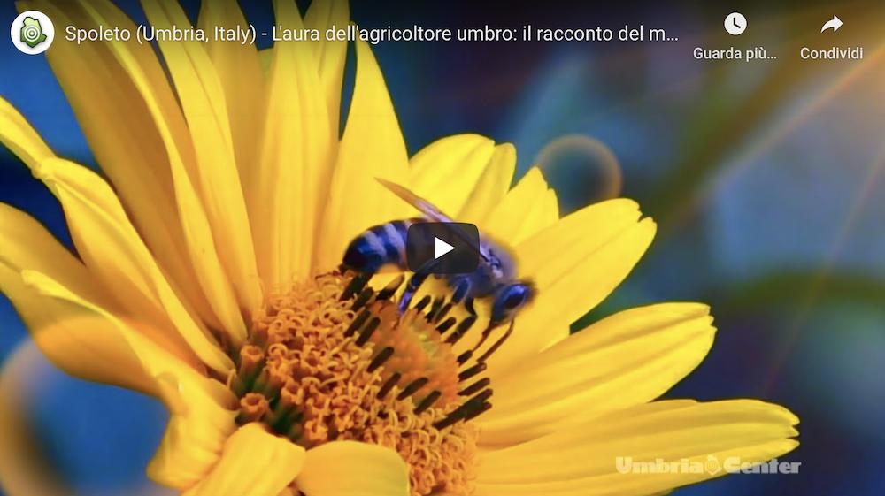 Spoleto (Umbria, Italy) – L'aura dell'agricoltore umbro: il racconto del miele